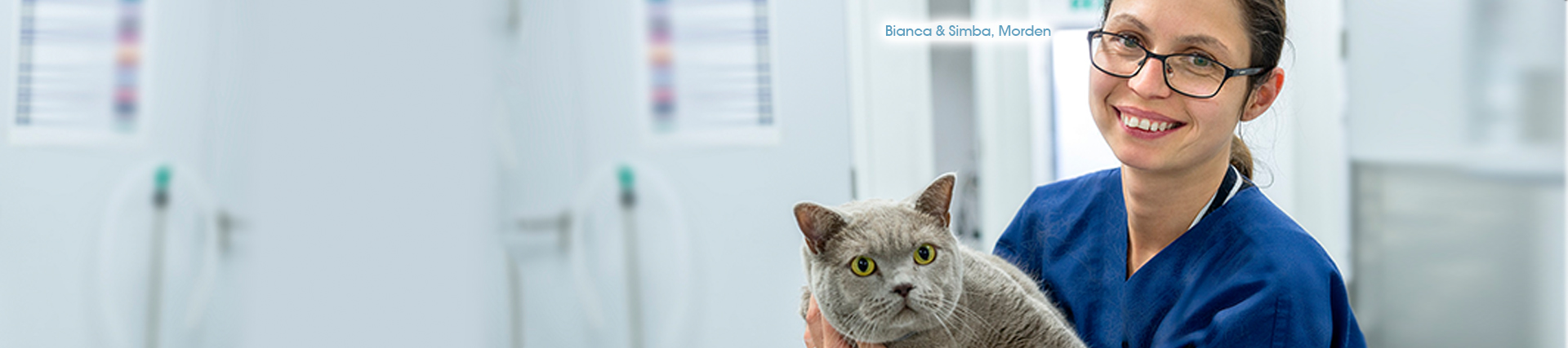 Senior Cat Clinics