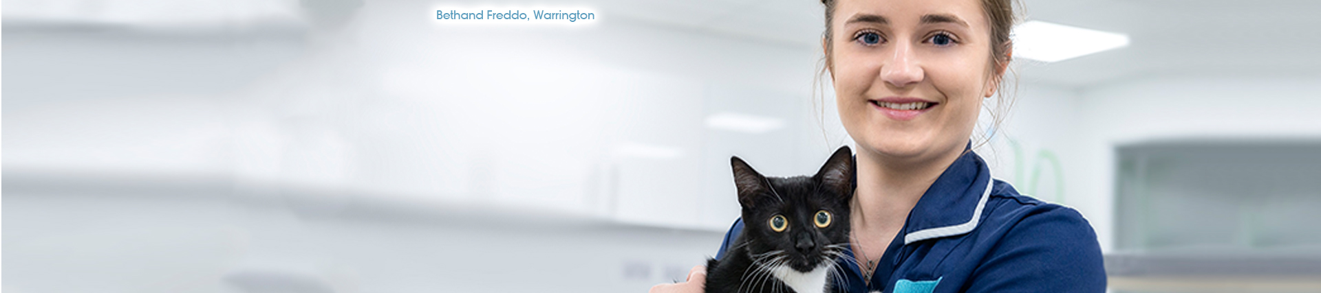 Fleas On Cats – Symptoms To Look Out For