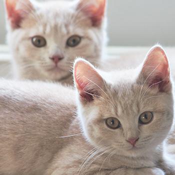 Cat Castration