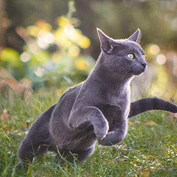 Cat Annual Vaccination