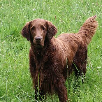 Dog Castration over 45kg