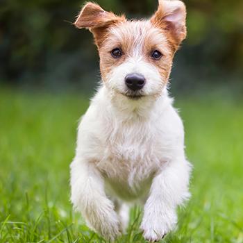 Dog Castration up to 25kg
